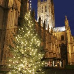 chistmas tree canterbury